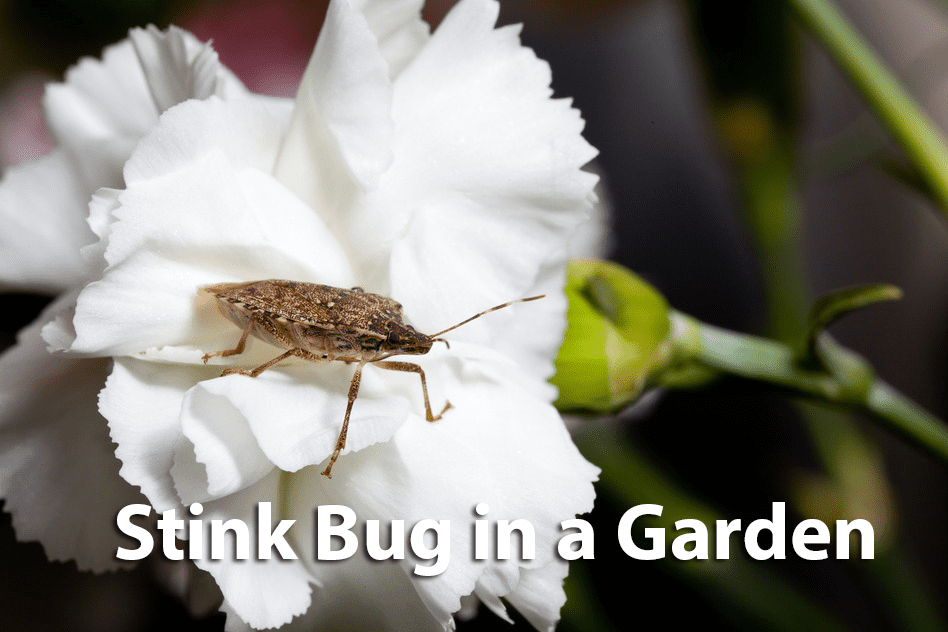 Top Rated Stink Bug Control Company in Springfield VA