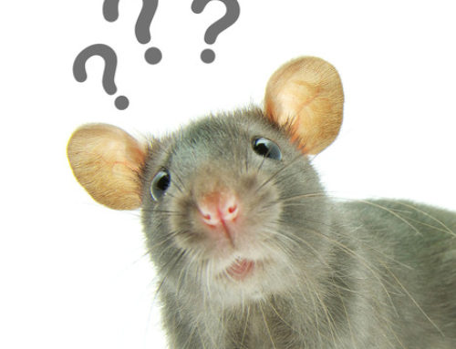 If You Don't Want A Rat Problem, Do These 4 Things!